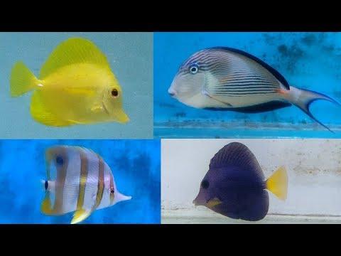 Marine Fish Types - Tang Fish, Clown Fish & Damsel Fish
