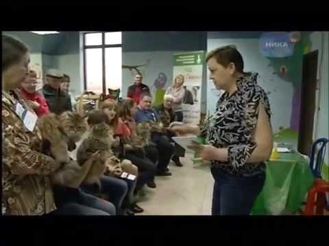 Выставка кошек в Калуге 7апреля2015