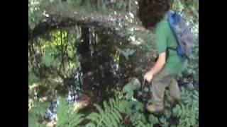 Wild Contronatura , Parodia Wild Oltrenatura