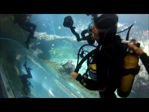 Aquarium Biarritz : Reportage Bac Pro photo Cahors