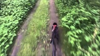 Staffordshire Bull Terrier  Bike Joring Arleux 2013