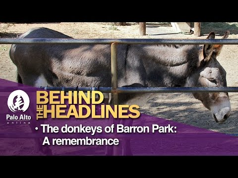 Behind The Headlines: The Donkeys of Barron Park - A Remembrance