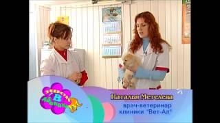 Как дать животному таблетку
