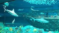 Corpus Christi - Texas State Aquarium