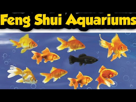 Feng Shui Aquariums