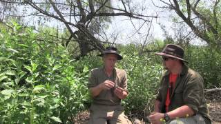 The Uses For Mugwort Featuring Jeff Martin And Christopher Nyerges
