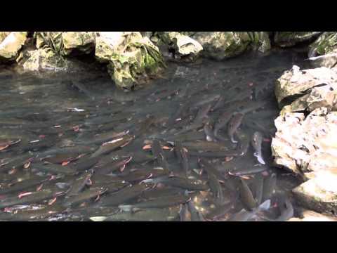 Suối cá thần, Cẩm Thủy, Thanh Hóa