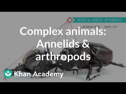 Complex animals: Annelids & arthropods | Crash Course biology| Khan Academy