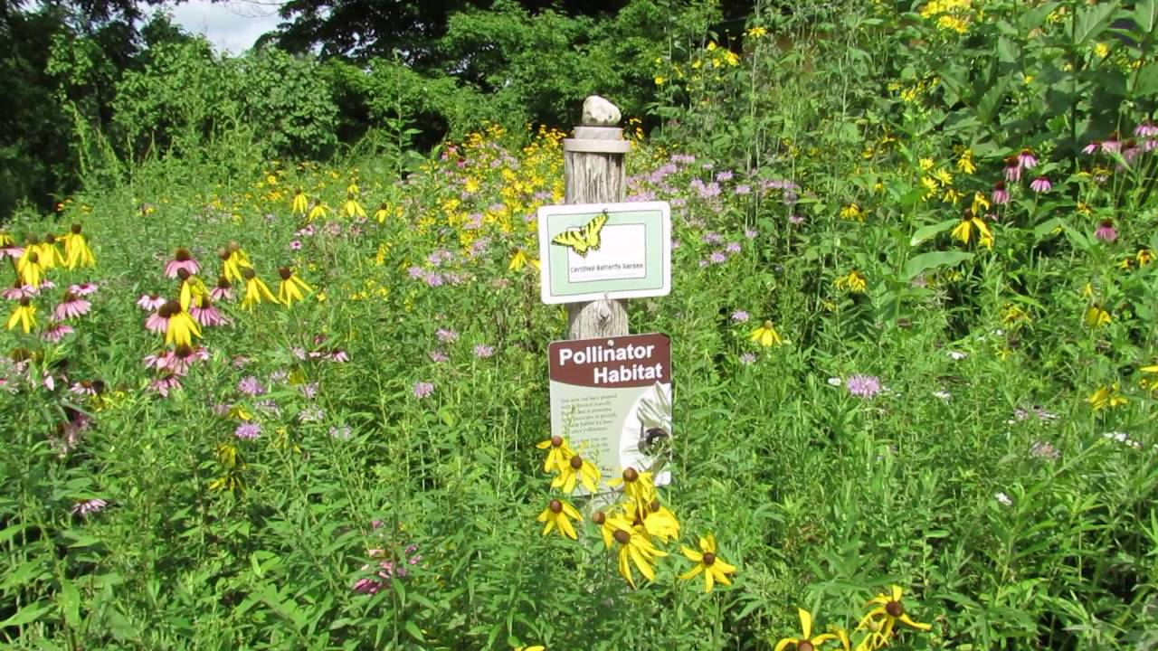 Native Wildflower Garden Tour