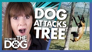 The Dog That Hangs from Trees and More | Victoria Reacts | It's Me or the Dog