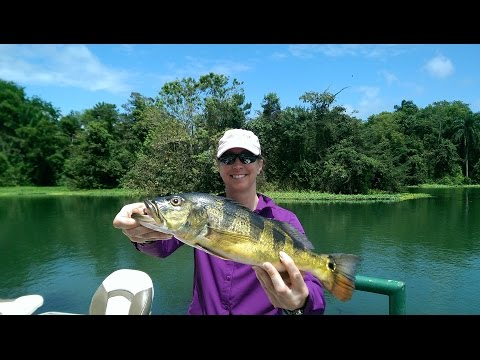 Fishing Panama...catching Peacock Bass And Then The Guide!