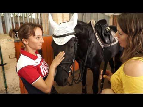 Подготовка лошади к выезду. Русская верховая лошадь