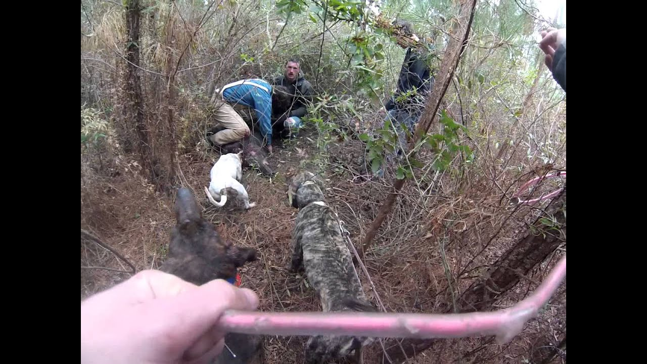 Mississippi hog hunting yankeecam youtube for Mississippi out of state fishing license