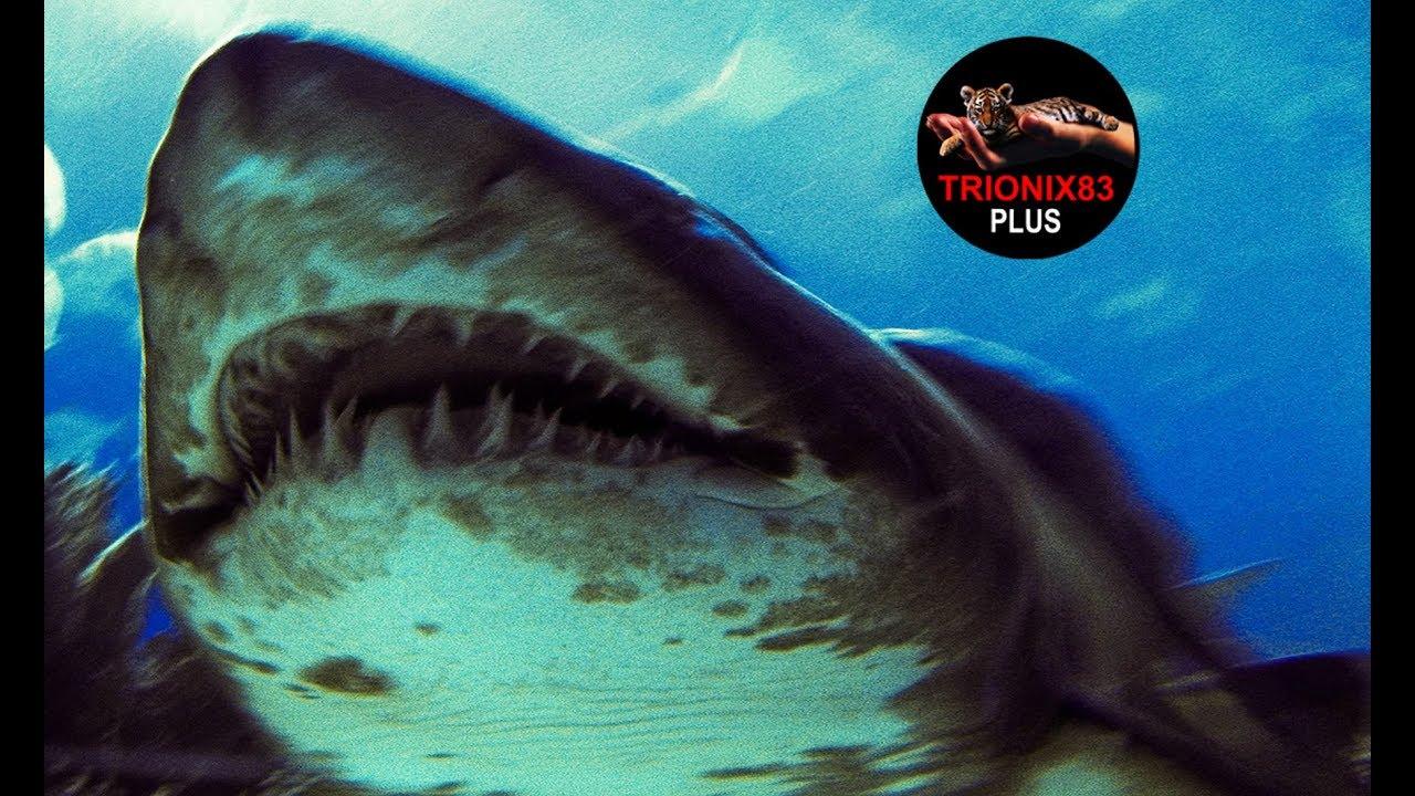 tiburones megalodon