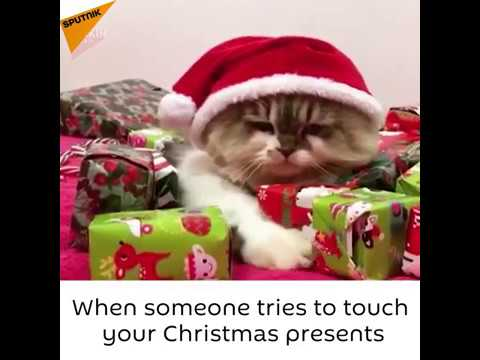Cat Being Protective Of Christmas Presents