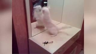 Epic laugh   Funniest Scared Cat Home 2018 Compilation   Funny cat Videos #2
