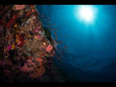 Amazing Alor Underwater