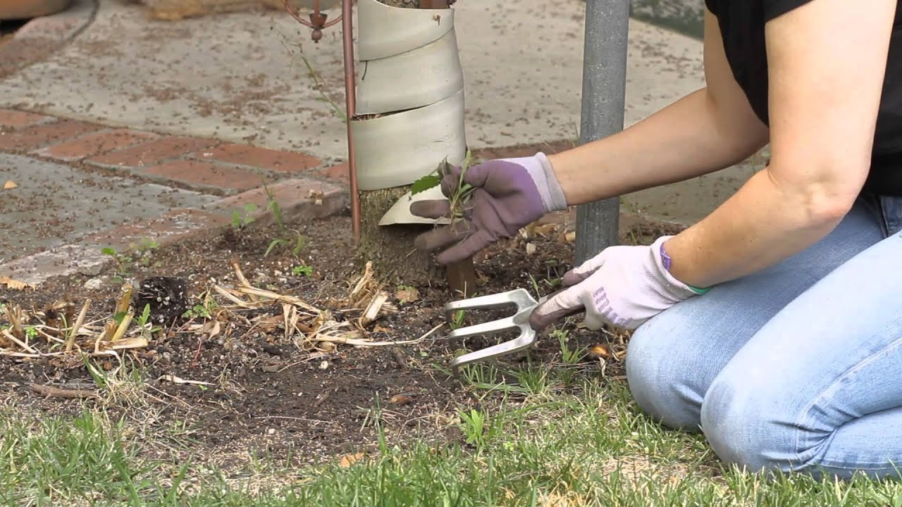 How to Clean Out a Weedy Flower Garden : Garden Space