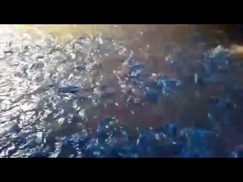 Cara berternak ikan lele - YouTube