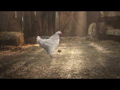 KFC FC