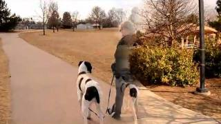 Teaching A Great Dane Loose Leash Walking
