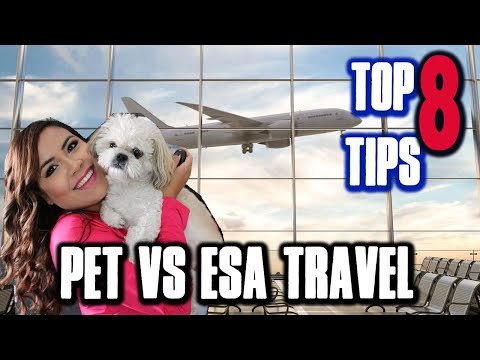 PET IN CABIN TRAVEL INFO Vs ESA TRAVEL (EVERY AIRLINE IN USA) | TOP 8 Tips