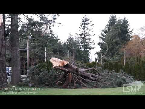 12-20-18 Whatcom County, WA High Wind Warning ; Lots of Power Outages, Tree Damage, Power Lines Down
