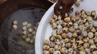 WILD QUAIL EGGS DELICIOUSLY MADE CURRY | GREAT TASTY EGG