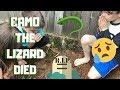 WE HAD TO BURY OUR PET LIZARD