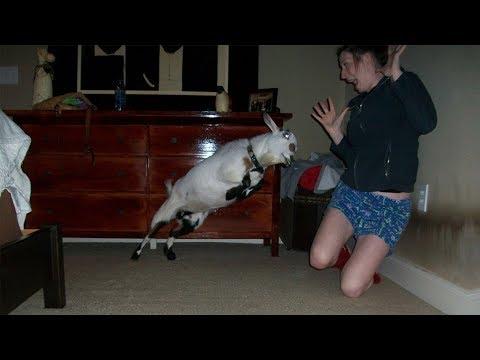 r/Entitledparents Goat HEADBUTTS an Entitled Karen!
