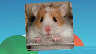 My Talking Pet for iOS and Android