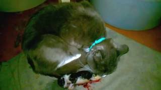 как рождаются котята
