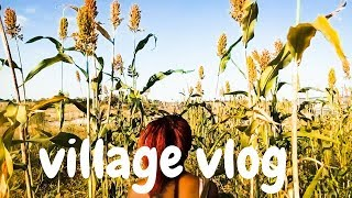 Oshiwambo Mahangu field tour || Namibian Lifestyle Pt  2