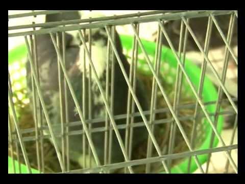 Trại bồ câu Bình Thuận ABC 0938.387.480