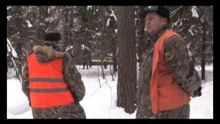 работа охотничьих собак по разным видам дичи