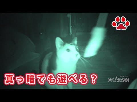 暗闇で猫は遊べるのか試してみた Dark and cat