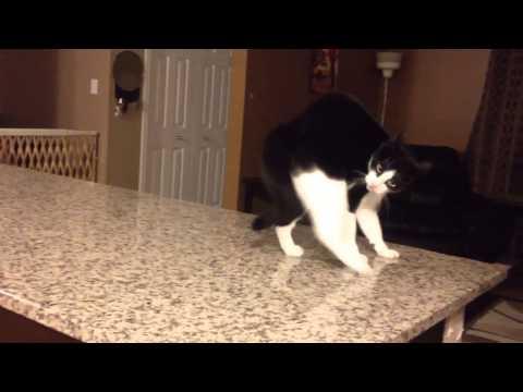 Cat crip walks