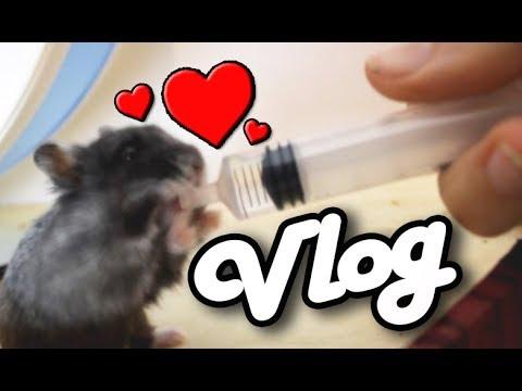 Hamster Zufüttern ♥ Einkauf bei Hüpis ♥ Versorgung meiner Tiere ♥ Miyukis♥Vlog