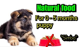 Natural and affordable homemade food for puppies||0-5months puppies||hindi||Simba||gsd