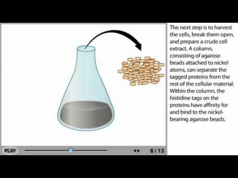Protein Purification Animation - his tag protein purification