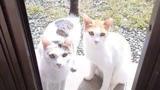 변화하는 고양이들!!