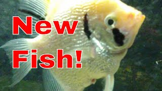 New Fish in the Tank!!! 1/4/21
