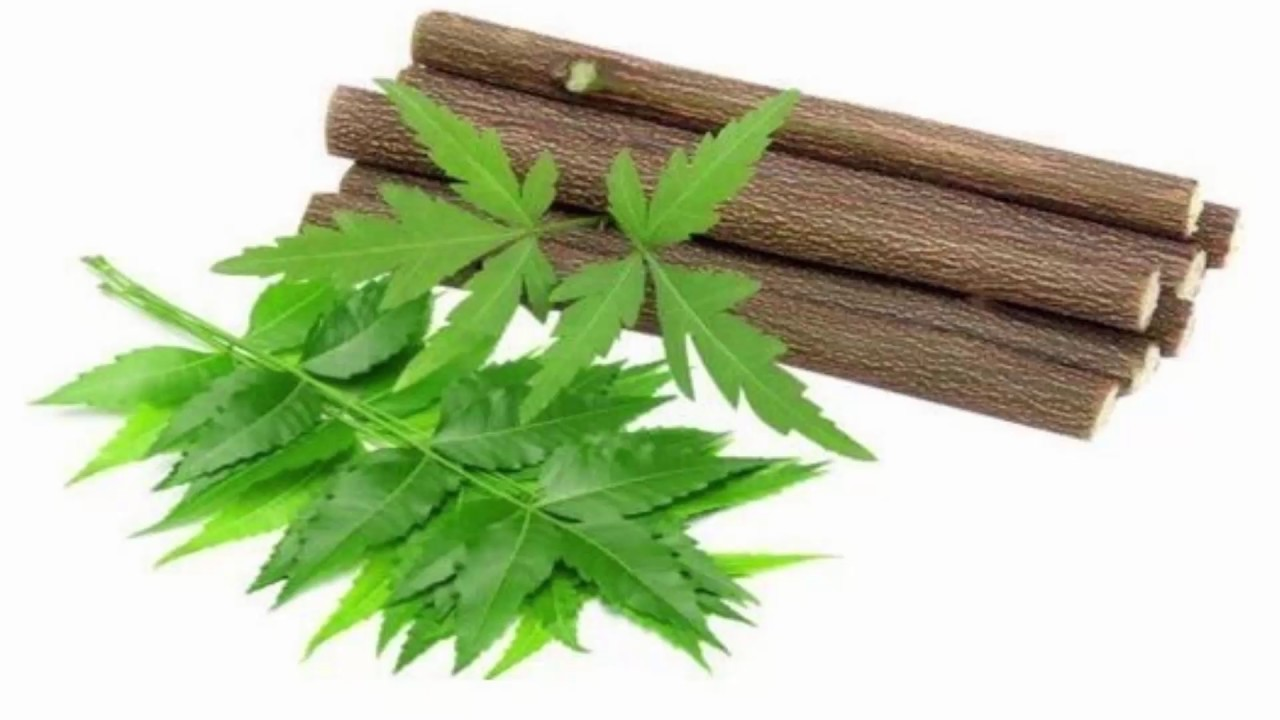 Image result for नीम की पत्तियां और दातुन