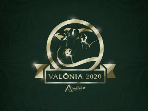 Lote 18   Parla 2 FIV da Valônia   JAA 5674 Copy