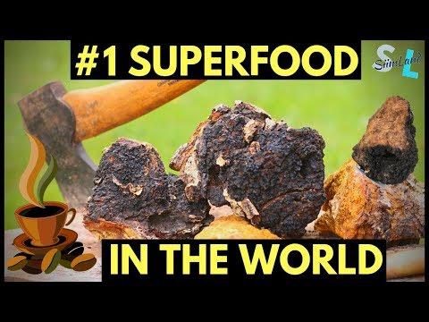 Benefits of Chaga Mushroom #1 Antioxidant in the World