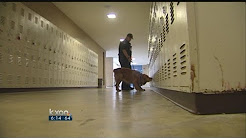 Do drug-sniffing dogs pass the smell test?
