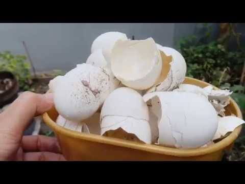 Make Effective Organic Fertilizer | How to prepare and Apply to Any Plants