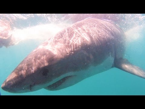 White Shark Cage Diving - Besiegt Jessi ihre Angst? - Südafrika | VLOG #162