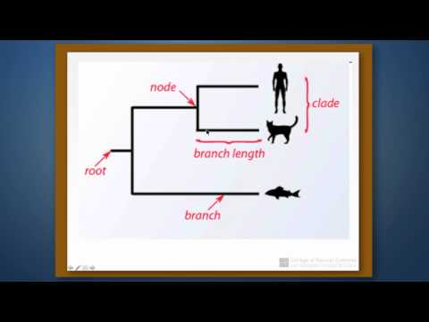 Phylogenetic Reconstruction: Part 1- Introduction