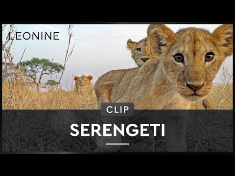 Serengeti - Hardy Krüger über die Faszination Afrika
